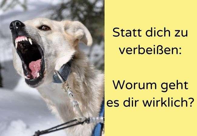 Hund fletscht die Zähne